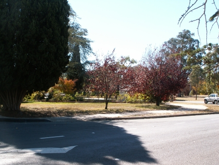 Canberra in Autumn #8