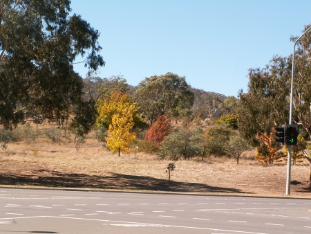 Canberra in Autumn #9