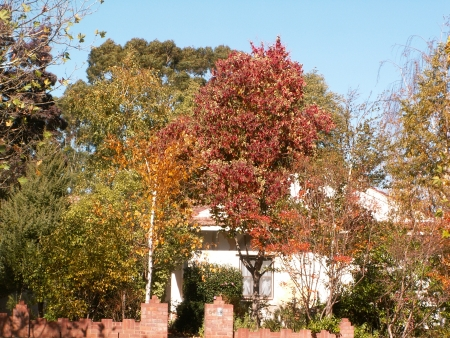 Canberra in Autumn #15