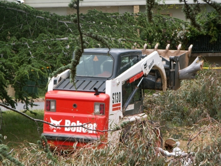 Bobcat moves tree bits