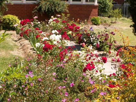 A nice garden in Reid