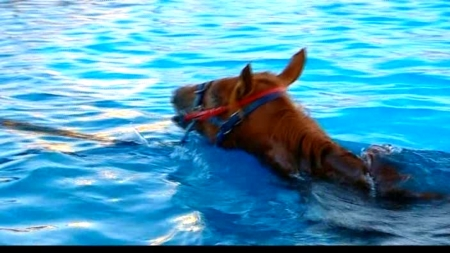 Horse in training pool