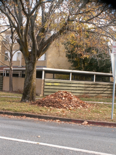 2006 Autumn Cleanup in Canberra: Neat piles of leaves