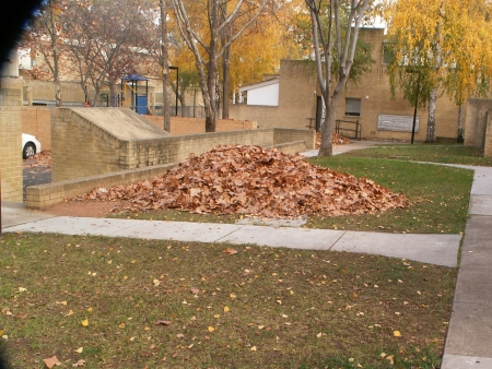 2006 Autumn Cleanup in Canberra: Great big pile of leaves