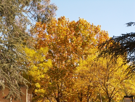 Canberra in Autumn #27