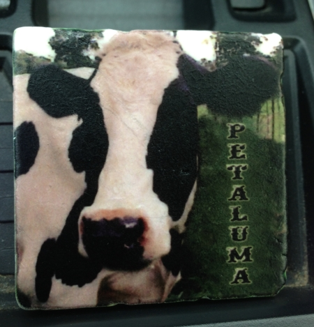 Petaluma cow fridge magnet