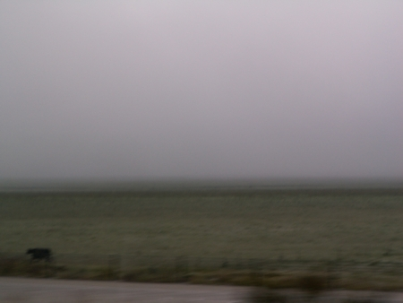 Fog and cow