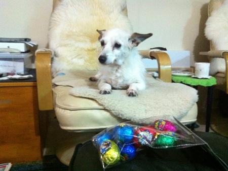 Nattie checks out some Easter eggs